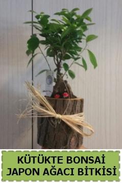 Kütük içerisinde doğal bonsai ağacı  Batman çiçekçi telefonları
