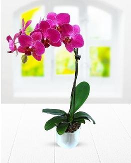 Tek dallı mor orkide  Batman çiçek satışı