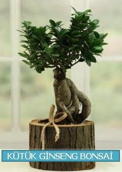 Kütük ağaç içerisinde ginseng bonsai  Batman çiçek gönderme sitemiz güvenlidir