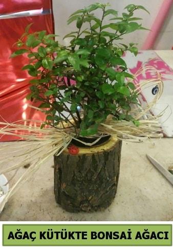 Doğal ağaç kütük içerisinde bonsai ağacı  Batman çiçek gönderme sitemiz güvenlidir