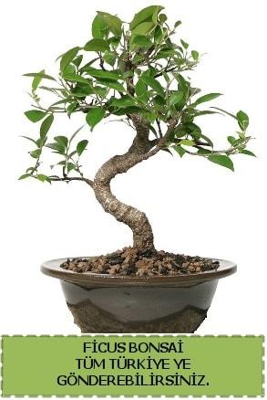 Ficus bonsai  Batman çiçek gönderme sitemiz güvenlidir