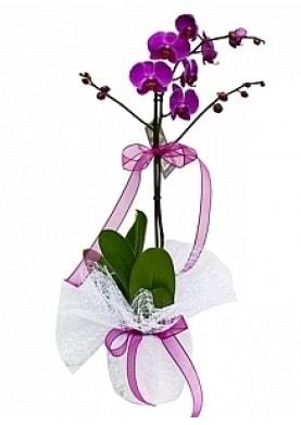 Tekli Mor Orkide  Batman çiçek yolla