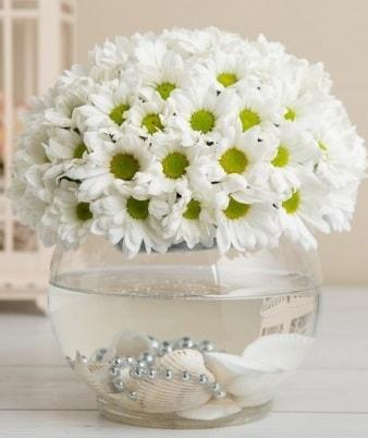 Fanusta beyaz Papatya  Batman çiçek satışı