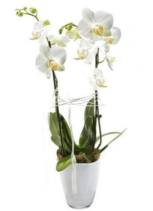 2 dallı beyaz seramik beyaz orkide saksısı  Batman çiçek gönderme sitemiz güvenlidir