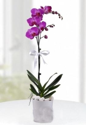 Tek dallı saksıda mor orkide çiçeği  Batman çiçekçiler